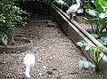 Birds in Zoo Negara Malaysia (10).jpg