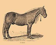 Bitjug-Pferd.jpg
