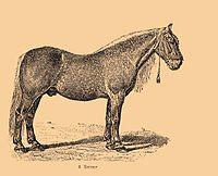 Bitjug horse.jpg