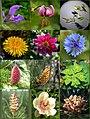 Blüten 1.jpg