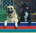 Black&lassie.jpg
