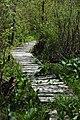 Black Moshannon State Park Bog Trail.JPG