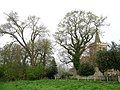 Black Poplar and Isfield Church - geograph.org.uk - 1528119.jpg