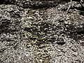 Black shale (Sunbury Shale, Lower Mississippian; Tener Mountain roadcut, southern Ohio, USA) 16 (35050008303).jpg
