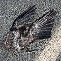 Blackbird-flat2.jpg