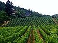 Blick zum Restaurant Waldschlößle - panoramio.jpg