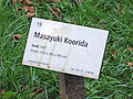 Blickachsen-7--19-masayuki-koorida-hg-001.jpg