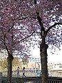 Blumen in Weidenau Siegen - panoramio (2).jpg