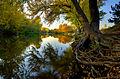 Boise River Autumn.jpg