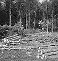 Bosbewerking, arbeiders, boomstammen, Bestanddeelnr 253-5936.jpg