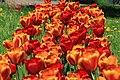 Botanic garden - Cluj-Napoca (4543600585).jpg