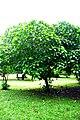 Botanic garden limbe56.jpg