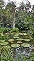 Botanical Garden Singapore (27375502649).jpg