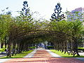 Bougainvillea Tunnel in Rongxin Park.jpg