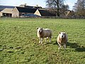 Bourton Far Hill Farm and two local residents - geograph.org.uk - 1589851.jpg
