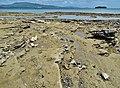 Braconnage à Mayotte.jpg