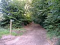 Bridleway, to Lympstone Common - geograph.org.uk - 1451268.jpg