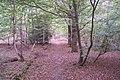 Bridleway in Timber Wood - geograph.org.uk - 1523088.jpg