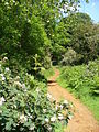 Bridleway near Lascombe - geograph.org.uk - 453236.jpg