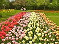 Britzer Garten - Tulipan 2013 - geo.hlipp.de - 36163.jpg