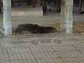 Brotvermehrungskirche in Tabgha (3786407492).jpg