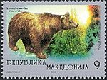 Brown Bear (Ursus arctos).jpg