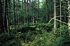 Brush Creek Hemlocks.jpg