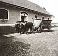 Buffalo, chariot, building, waiting Fortepan 83685.jpg