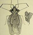 Bulletin du Muséum d'histoire naturelle (1921) (14594695199).jpg