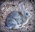Bunny1c (8292859836).jpg