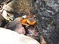 Butterfly-2-mundanthurai-tirunelveli-India.jpg