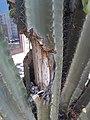 Cactus wood.jpg