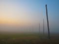 Cahokia Woodhenge at dawn.png