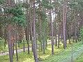 Caledonian Pine Wood - geograph.org.uk - 221204.jpg