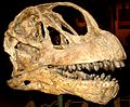 Camarasaurus lentus.jpg