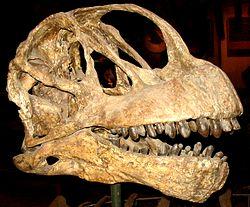 Camarasaurus skull.