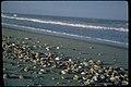 Canaveral National Seashore, Florida (17924ba6-be73-4b80-9e32-f524dddb408f).jpg
