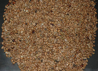 Coffea canephora - Unroasted robusta beans