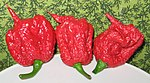 Carolina Reaper pepper pods (cropped).jpg