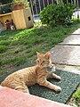 Cat 06 10 09 004.jpg