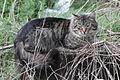 Cat 9354 (9431164755) (3).jpg