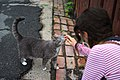 Cat being petted by Santamarcanda in Rue Holt, Montreal.jpg