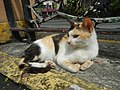 Cats in t1302Cats in the Philippines 25.jpg