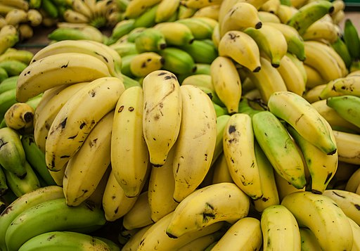 Cavendish banana from Maracaibo