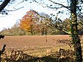 Cefn Mably Woods - geograph.org.uk - 88025.jpg