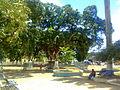 Centro Goiana7.jpg