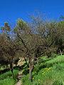 Cerro Condell, sendero (16694019274).jpg