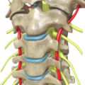 Cervical Spine Cross View.png