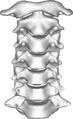 Cervical spine Anterior.png