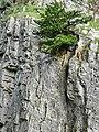 Cheddar Gorge ...Rock climber - panoramio.jpg